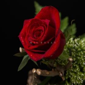 Rosa Individual Roja (Fresca)