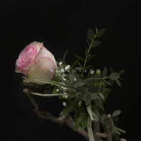 Rosa Individual Rosa Claro