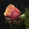 Rosa Individual Naranja