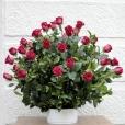 Centro de rosas Naturaleza