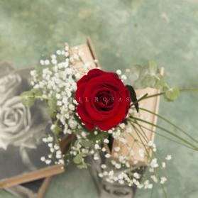 Rosa Individual Rojo Pasión (Preservada)