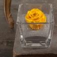 Perla Amarillo Vital