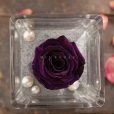 Perla Púrpura Magia