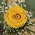 Rosa Individual Amarilla Vital