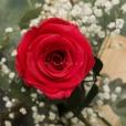 Rosa Individual Coral Amistad