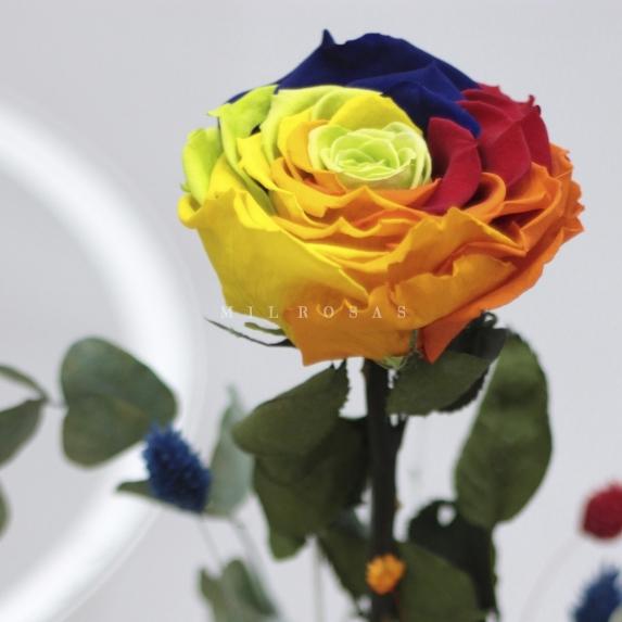 Rosa Individual Arcoiris Preservada XXL
