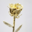 Gold Rose, Rosa de Oro